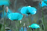 Fleurit en Bleu II Print