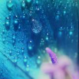 Morning Dew on Flower Art