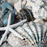 Seachells in Blue II Art