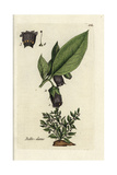 "Deadly Nightshade, Atropa Belladonna, From Pierre Bulliard's ""Flora Parisiensis,"" 1776, Paris Giclee Print by Pierre Bulliard"