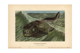 Dinichthys, Extinct Genus of Placoderms, Armored Fish From the Devonian Giclee Print by F. John