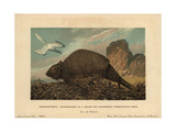 Archaeopteryx Lithographica, Extinct Prehistoric Bird Dinosaur, And Panochthus Tuberculatus Owen Giclee Print by F. John
