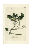 "Creeping Woodsorrel, Oxalis Corniculata, From Pierre Bulliard's ""Flora Parisiensis,"" 1776, Paris Giclee Print by Pierre Bulliard"