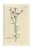 "Narrow-leaved Flax, Linum Tenuifolium, From Pierre Bulliard's ""Flora Parisiensis,"" 1776, Paris Giclee Print by Pierre Bulliard"