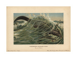 Tylosaurus Pelor, a Type of Mosasaur, a Large, Predatory Marine Lizard From the Cretaceous Giclee Print by F. John