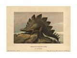 Stegosaurus Ungulatus, Extinct Ground-dwelling Herbivore of the Jurassic Giclee Print by F. John