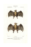 Geoffroy's Rousette Bat, Rousettus Amplexicaudatus, And Naked-backed Fruit Bat, Dobsonia Peronii Giclee Print by Jean Gabriel Pretre