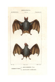 Greater False Vampire Bat, Megaderma Lyra, And Horseshoe Bat, Rhinolophus Tridens Giclee Print by Jean Gabriel Pretre