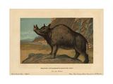 Brontops Robustus, Extinct Genus of Rhinoceros-like Perissodactyl Mammal Giclee Print by F. John
