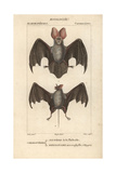 Egyptian Bats From Frederic Cuvier's Dictionary of Natural Science: Mammals, Paris, 1816 Giclee Print