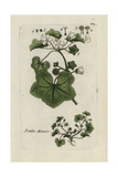 "Dwarf Mallow, Malva Rotundifolia, From Pierre Bulliard's ""Flora Parisiensis,"" 1776, Paris Giclee Print by Pierre Bulliard"