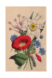 Hepatica, Poet's Narcissus, Scarlet Ipomoea, Anemone Japonica And Erica Giclee Print by James Andrews
