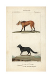 Red Wolf And Silver Fox From Frederic Cuvier's Dictionary of Natural Science: Mammals, Paris, 1816 Giclee Print
