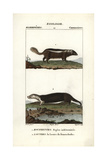 Skunk And Sea Otter From Frederic Cuvier's Dictionary of Natural Science: Mammals, Paris, 1816 Giclee Print