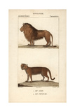 Lion And Cougar From Frederic Cuvier's Dictionary of Natural Science: Mammals, Paris, 1816 Giclee Print