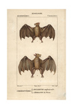 Rousette And Fruit Bats From Frederic Cuvier's Dictionary of Natural Science: Mammals, Paris, 1816 Giclee Print