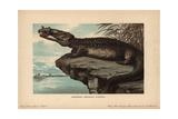 Belodon, Krokodil, Belodon Kapfii, Extinct Species of Crocodile-like Phytosaur From the Triassic Giclee Print by F. John