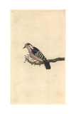 Lesser-spotted Woodpecker From Edward Donovan's Natural History of British Birds, 1799 Giclee Print by Edward Donovan