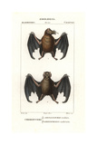 Tailed Tailless Bat, Anoura Caudifer, And Lesser Tailless Bat, Glossophaga Caudifer Giclee Print by Jean Gabriel Pretre