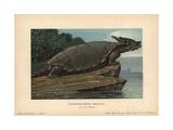 Meiolania, Extinct Genus of Cryptodire Turtle From the Oligocene To Holocene Giclee Print by F. John