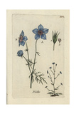 "Love in a Mist, Nigella Arvensis, From Pierre Bulliard's ""Flora Parisiensis,"" 1776, Paris Giclee Print by Pierre Bulliard"