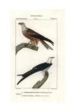 Yellow-billed Kite, Milvus Aegyptius, And Swallow-tailed Kite, Elanoides Forficatus Giclee Print by Jean Gabriel Pretre