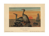 Hesperornis Regalis, Extinct Genus of Flightless Aquatic Birds That Lived in the Cretaceous Giclee Print by F. John