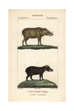 Warthog And Tapir From Frederic Cuvier's Dictionary of Natural Science: Mammals, Paris, 1816 Giclee Print