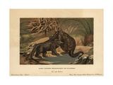 Megalosaurus, Extinct Carnivorous Theropod, Fighting An Iguanodon, Extinct Genus of Herbivore Giclee Print by F. John