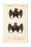 Tailless Bats From Frederic Cuvier's Dictionary of Natural Science: Mammals, Paris, 1816 Giclee Print