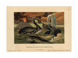 Plesiosaurus, Extinct Aquatic Carnivore, And Ichthyosaurus Communis, Extinct Nektonic Carnivore Giclee Print by F. John