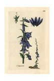 "Peach-leaved Bellflower, Campanula Persicifolia, From Bulliard's ""Flora Parisiensis,"" 1776, Paris Giclee Print by Pierre Bulliard"