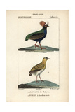 Crested Partridge And Madagascar Plover Reproduction procédé giclée