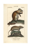 Hutia And Karoo Bush Rat From Frederic Cuvier's Dictionary of Natural Science: Mammals Giclee Print