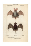 Bats From Frederic Cuvier's Dictionary of Natural Science: Mammals, Paris, 1816 Giclee Print