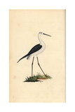 Stilt From Edward Donovan's Natural History of British Birds, London, 1799 Reproduction procédé giclée par Edward Donovan