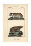 Mole Rats From Frederic Cuvier's Dictionary of Natural Science: Mammals, Paris, 1816 Giclee Print