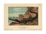 Teleosaurus, Extinct Crocodilian Carnivore of the Cretaceous Giclee Print by F. John