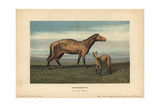 Protorohippus Or Orohippus, Extinct Ancestor of the Horse From the Eocene Giclee Print by F. John