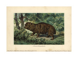 Giant Hyrax, Riesenklippdachs, Extinct Ancestor of the Rock Or Cape Hyrax (Procavia Capensis) Giclee Print by Heinrich Harder