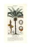 Queen Sago, Cycas Circinalis Giclee Print by Jean Gabriel Pretre