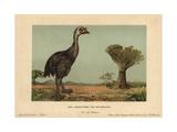 Moa, Dinornis Novaezealandiae, Extinct Giant Bird of New Zealand Giclee Print by F. John
