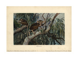 Tarsius, Haplorrhine Primate Genus That Can Be Traced Back 45 Million Years Giclee Print by Heinrich Harder
