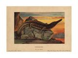 Archegosaurus, Extinct Genus of Temnospondyl Amphibian Which Lived During the Permian Giclee Print by F. John