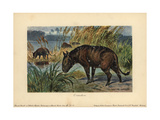 Merycoidodon Or Oreodon, Extinct Genus of Herbivore Endemic To North America Giclee Print by Heinrich Harder