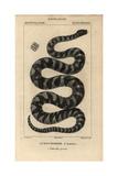 Little Filesnake, Acrochordus Granulatus Giclée-tryk af Jean Gabriel Pretre