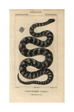 Little Filesnake, Acrochordus Granulatus Giclee Print by Jean Gabriel Pretre