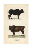 Water Buffalo And Auroch From Frederic Cuvier's Dictionary of Natural Science: Mammals Giclee Print