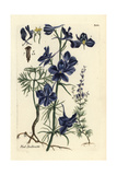"Forking Larkspur, Consolida Regalis, From Pierre Bulliard's ""Flora Parisiensis,"" 1776, Paris Giclee Print by Pierre Bulliard"