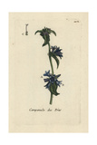 "Clustered Bellflower, Campanula Glomerata, From Bulliard's ""Flora Parisiensis,"" 1776, Paris Giclee Print by Pierre Bulliard"